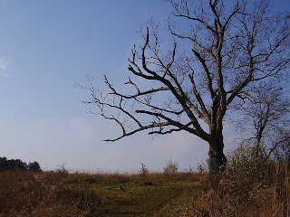 The Devil's Tree in Bernard's Township, New Jersey
