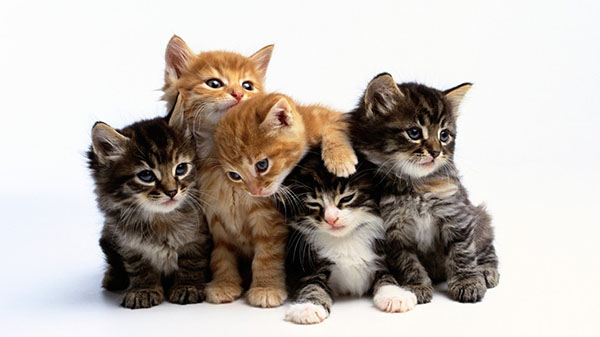 cute cats cute kittens