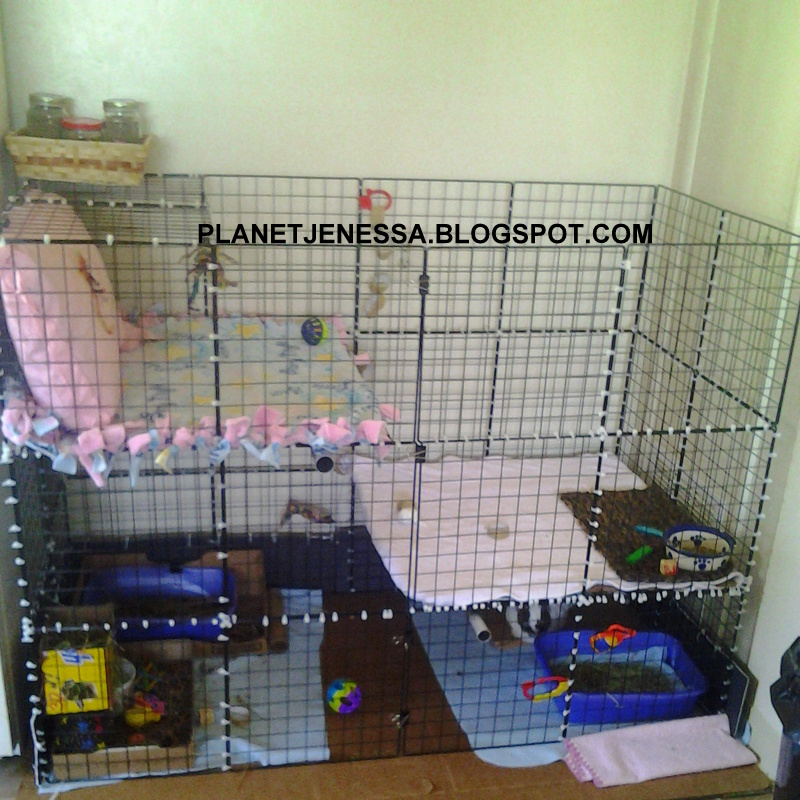 1000 images about guinea pig cages on pinterest indoor for Design indoor rabbit cages