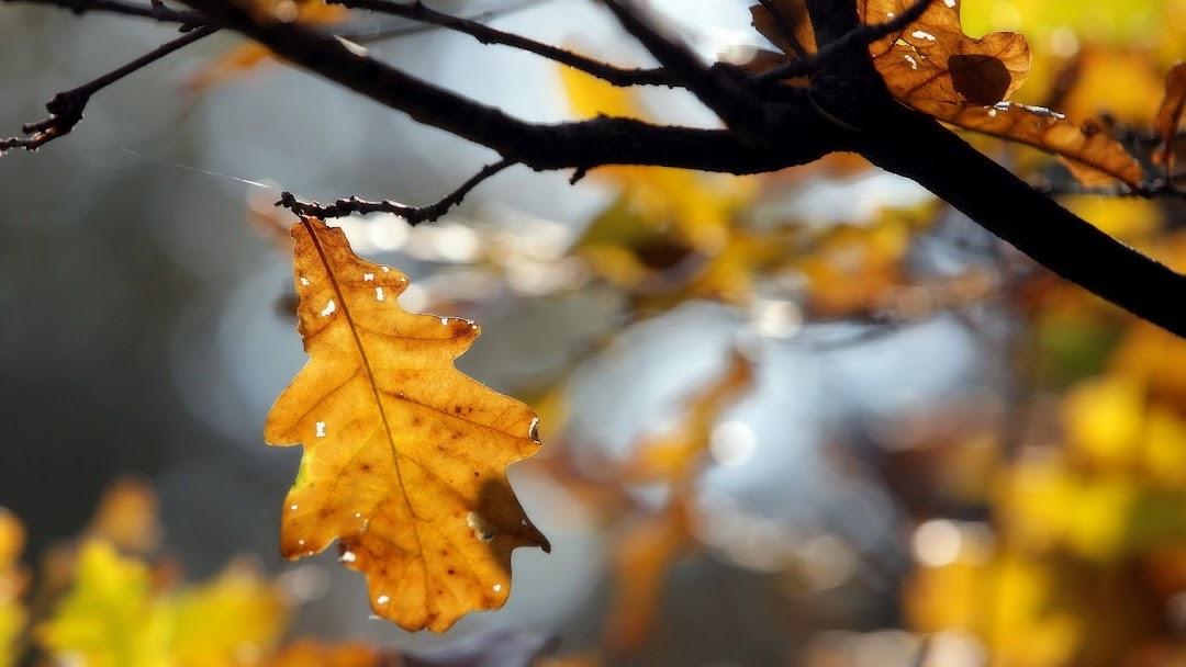 Leaves Macro HD Wallpaper 3