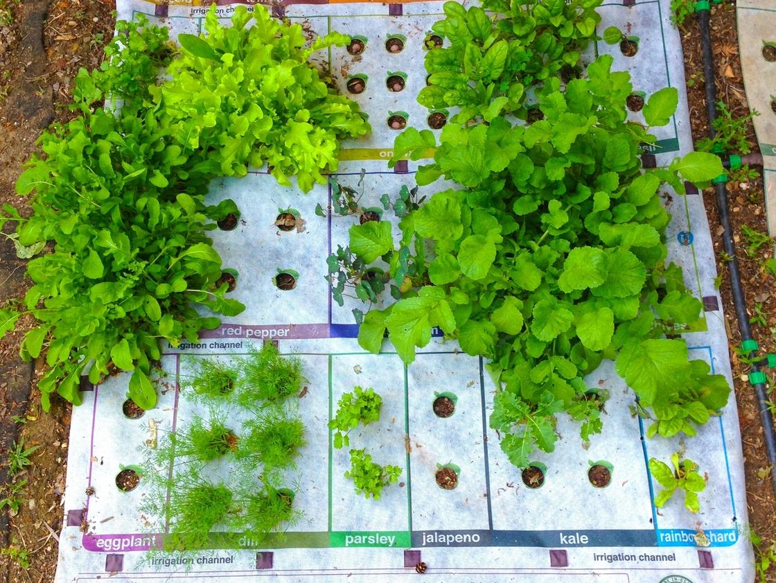 Célèbre lesurvivaliste: Le micro-jardin MU06