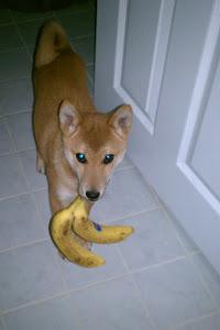 Yoshi the Thief