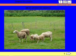 http://chiscos.net/almacen/lim/animais_do_campo/animais_do_campo.html