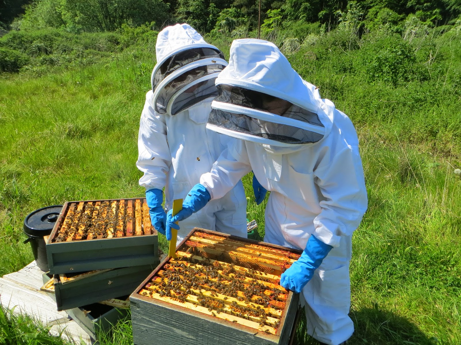 open apiary with Grantham District Beekeepers.