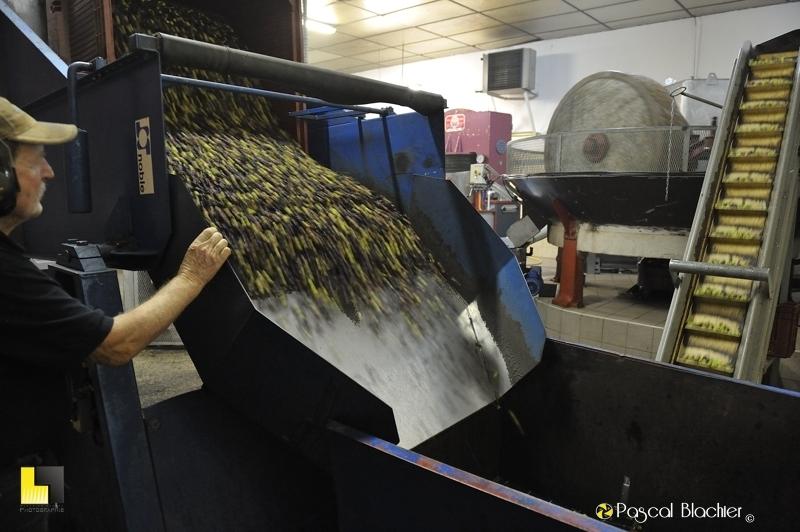 les olives sont déversées dans le cône de montage des olives vers les meules photo blachier pascal