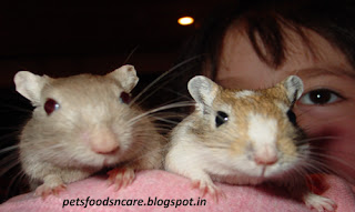 Nutrition of Gerbils