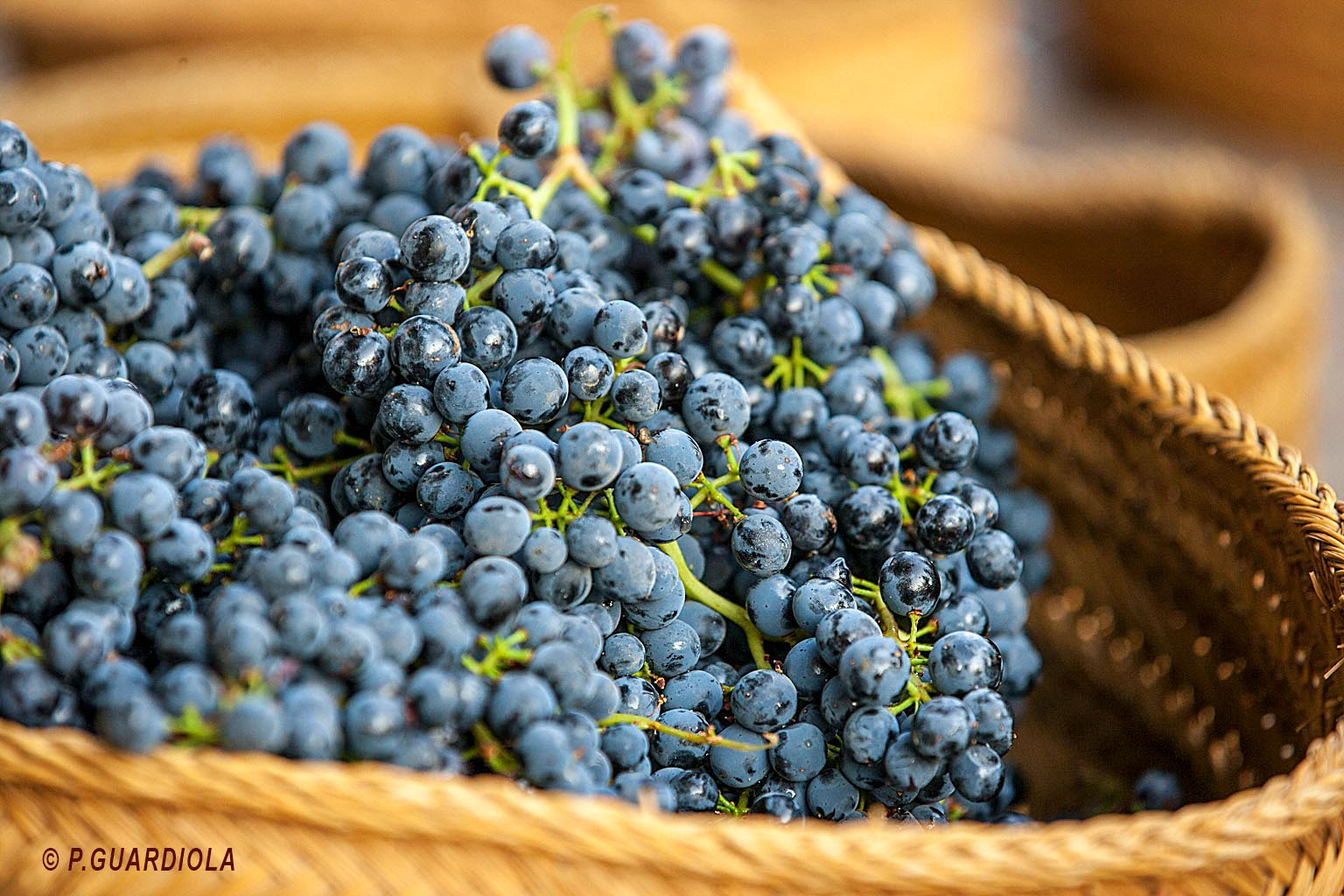Ofrenda de uvas Jumilla 2014