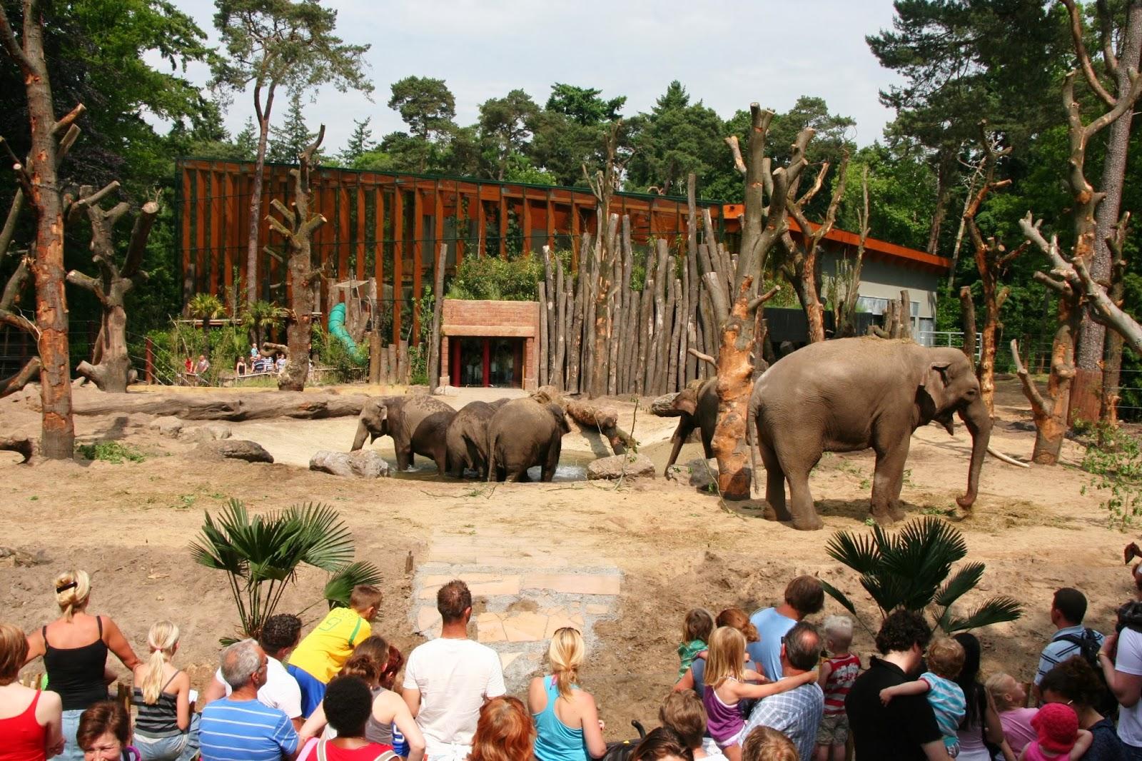 Zoologico-na-holanda-zoo-holand