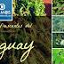 Remedios refrescantes del Paraguay, conoce sus propiedades.