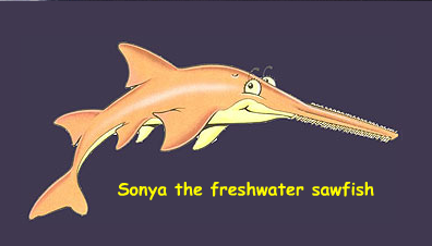 The story of Sonya the Sawfish