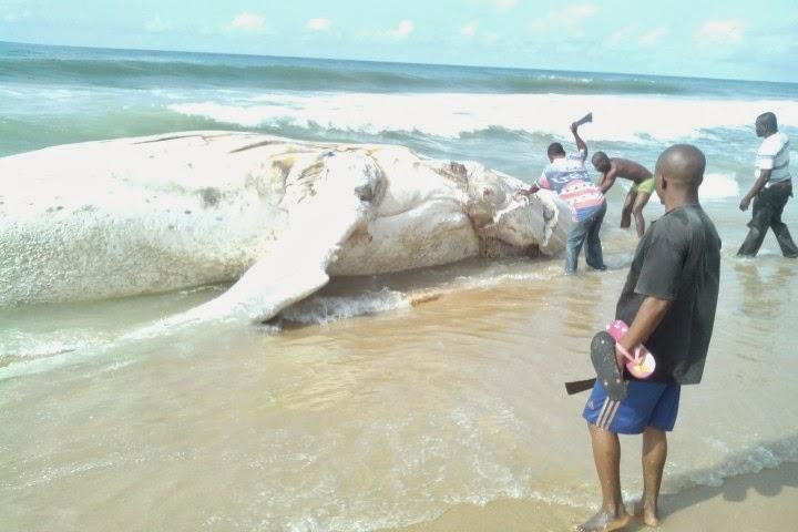 dead whale lagos beach
