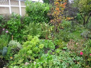 autumn garden, England
