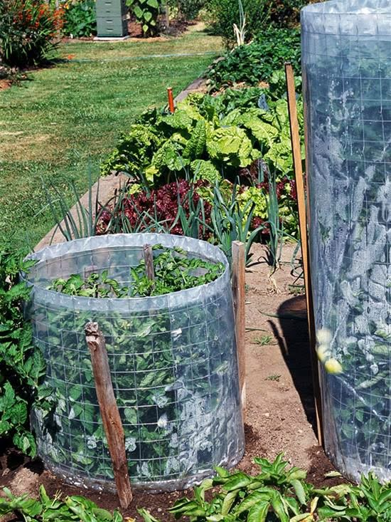 growing tomatoes in plastic mesh | Manufacturers Outdoor Furniture