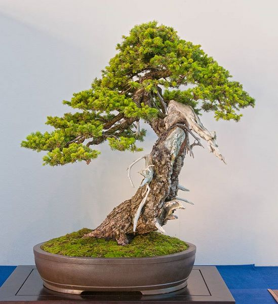 great bonsai tree inspiration big little trees