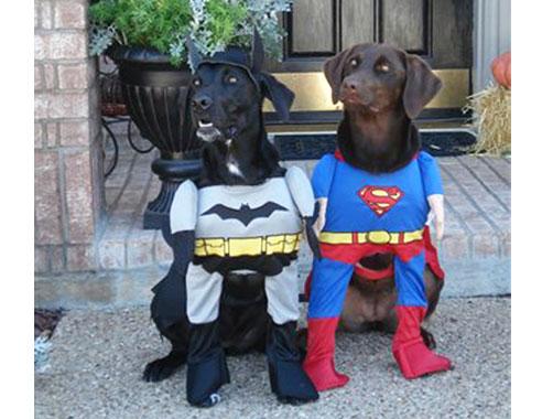 Funny+Superhero+Dogs