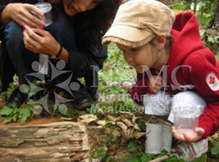 child looks at log with teacher montessori values cosmic education earth day