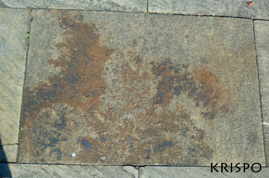 losa de piedra con fosiles vegetales y minerales