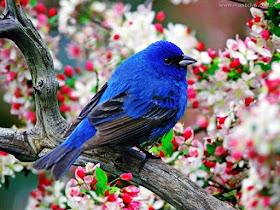 les fleurs... les oiseaux...merveilleuse!!