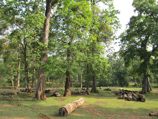 Wood logs, Dandeli
