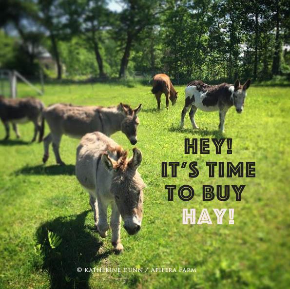 Hay Fund 2018