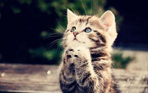 Fakta dan Keistimewaan Kucing