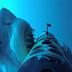 Köpek Balığı Kamerasından İlginç Görüntüler