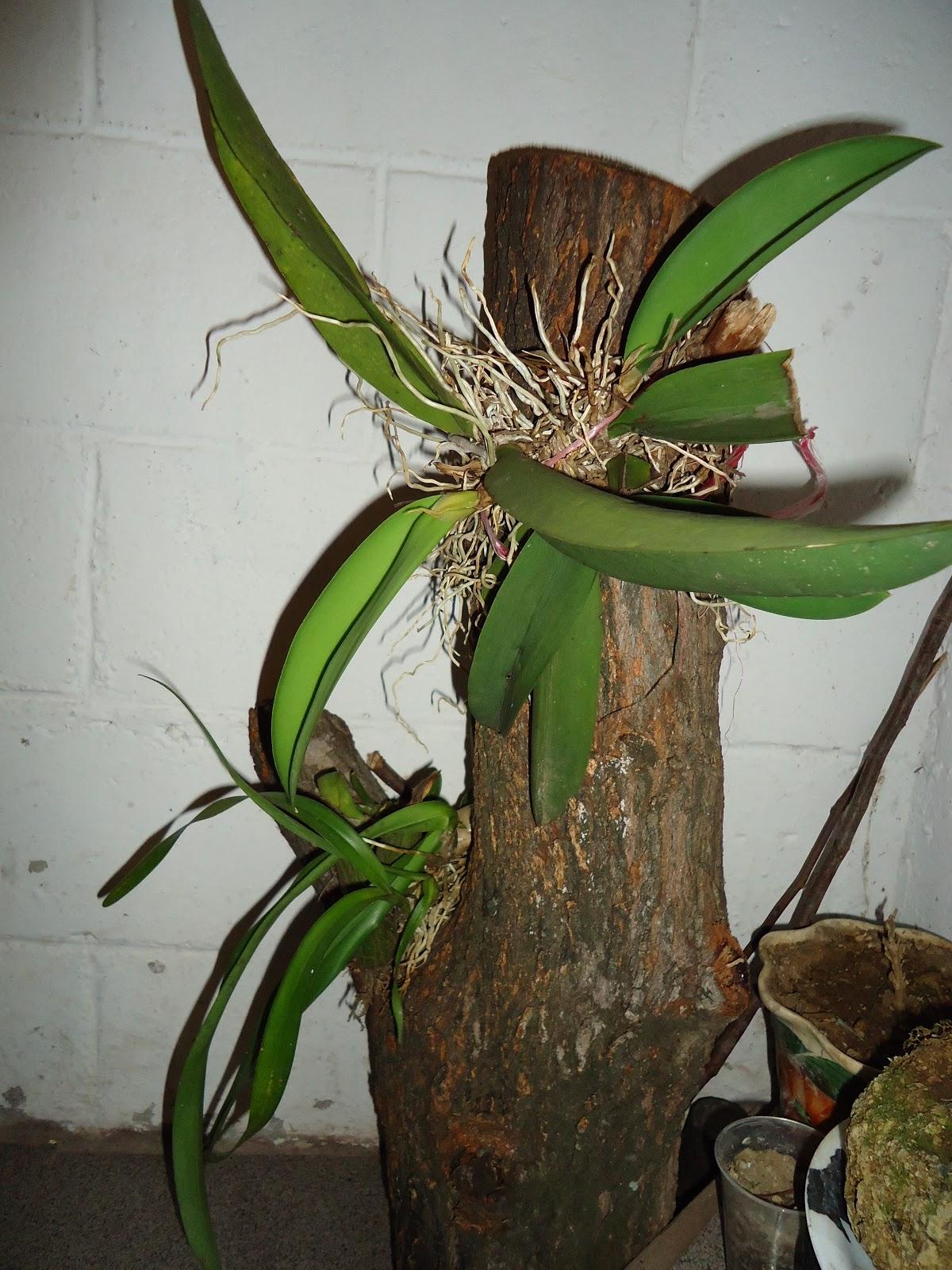 Flores y plantas hermosas orquideas for Tipos de hojas ornamentales