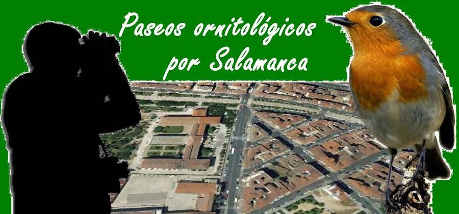 Paseos Ornitológicos por Salamanca
