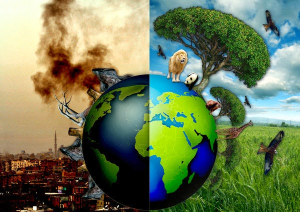 effects of deforestation on earth