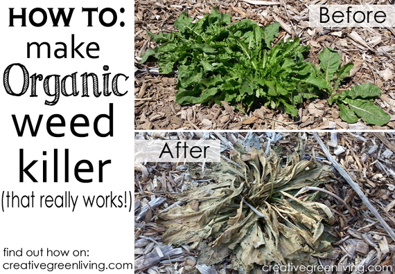 How to Make Organic Round Up Alternative Weed Killer