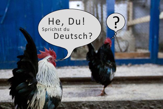 Занятия немецкого языка будут