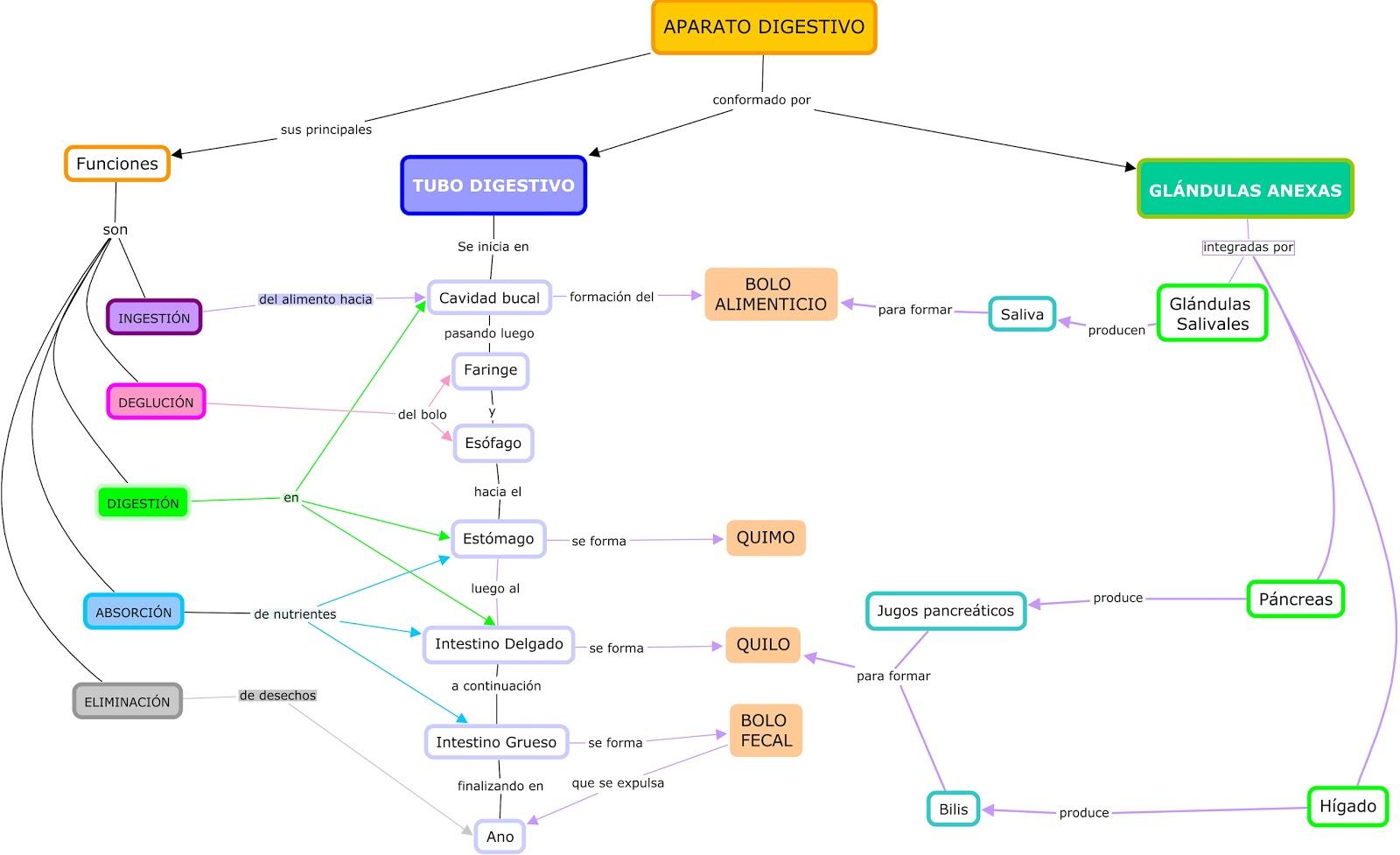 Perfecto Gráfico De Sistemas Del Cuerpo Humano Motivo - Anatomía de ...