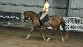 Jeffrey Lord riding Miss Carol's horse, Taz