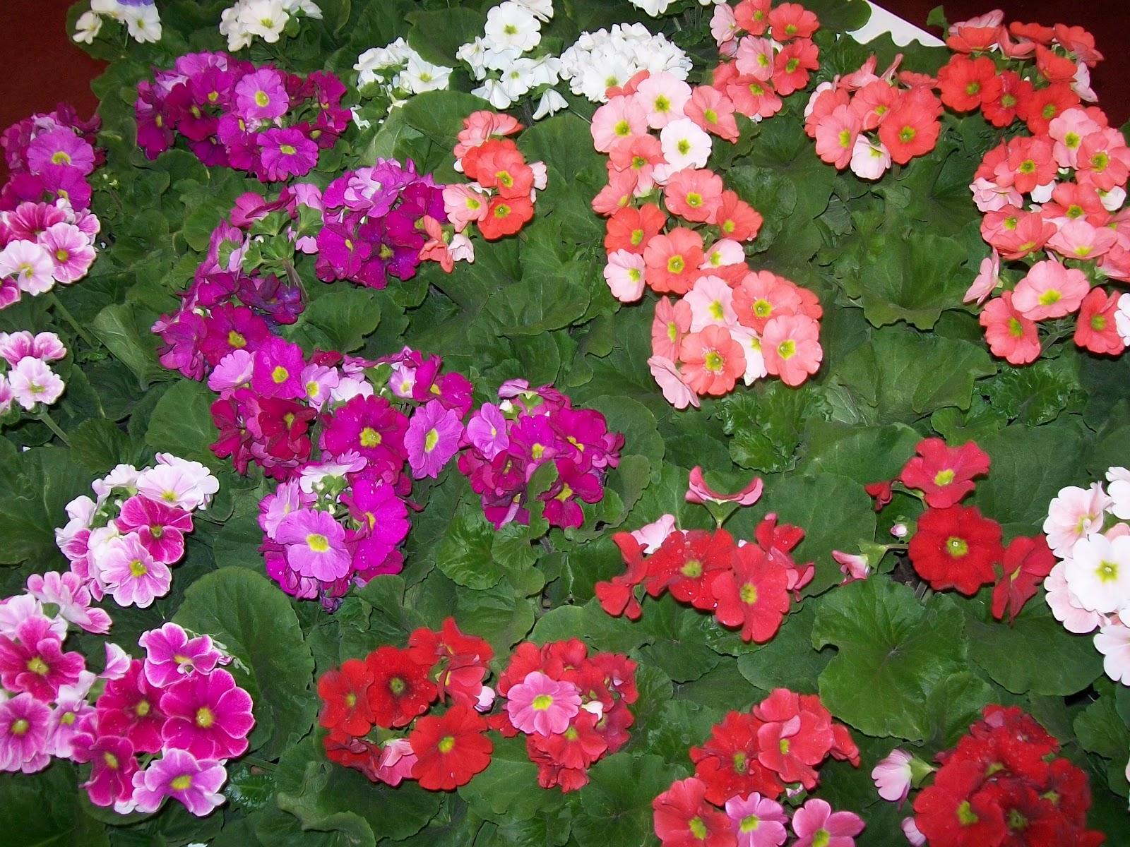 Las flores del frio las manos en la tierra - Flores que aguantan el sol ...