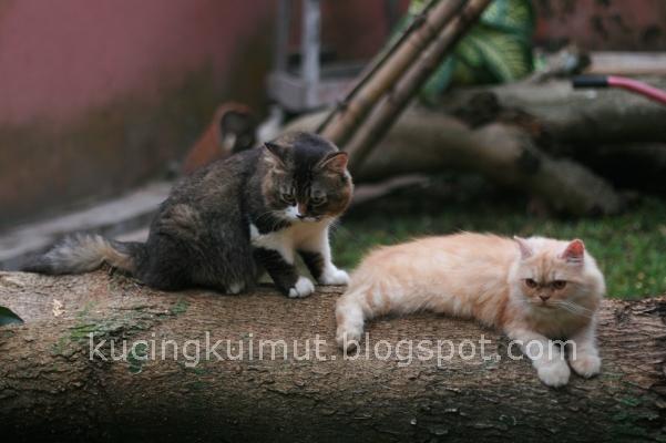 Merawat Kucing Yg Baru Melahirkan Hamsterku Kok Makan