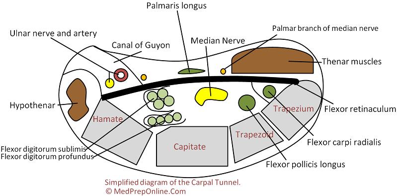 Diagnosis: Carpal Tunnel Diagnosis