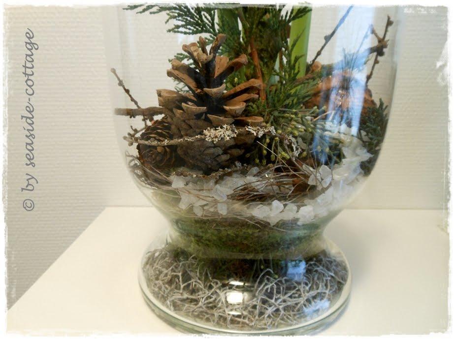 amaryllis im glas mit moos amaryllis in glas mit moos und zapfen antreiben bild kaufen. Black Bedroom Furniture Sets. Home Design Ideas