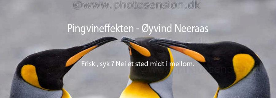 Pingvineffekten - Øyvind Neeraas