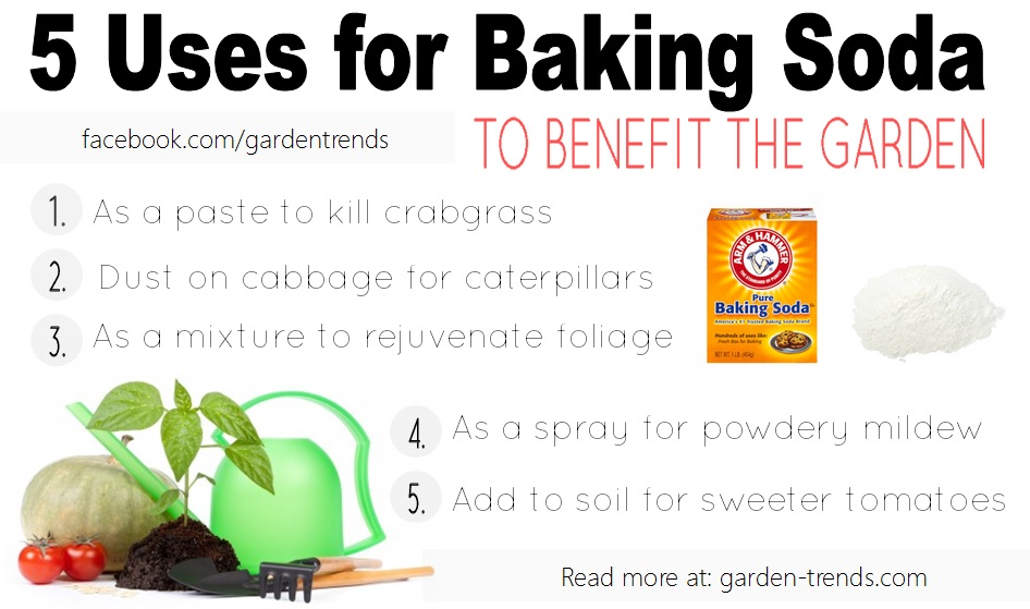 Garden Trends: 5 USES FOR BAKING SODA IN THE GARDEN
