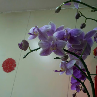 so many orchid blossoms