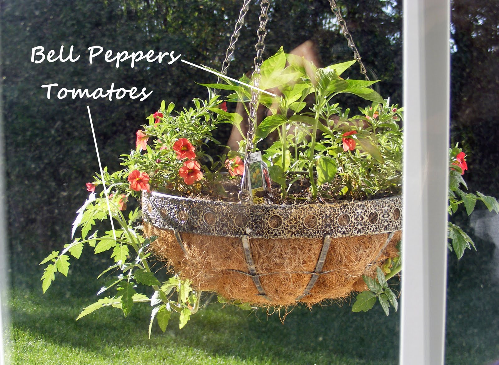 Great ideas handmade mother 39 s day gifts to make for Hanging vegetable garden ideas