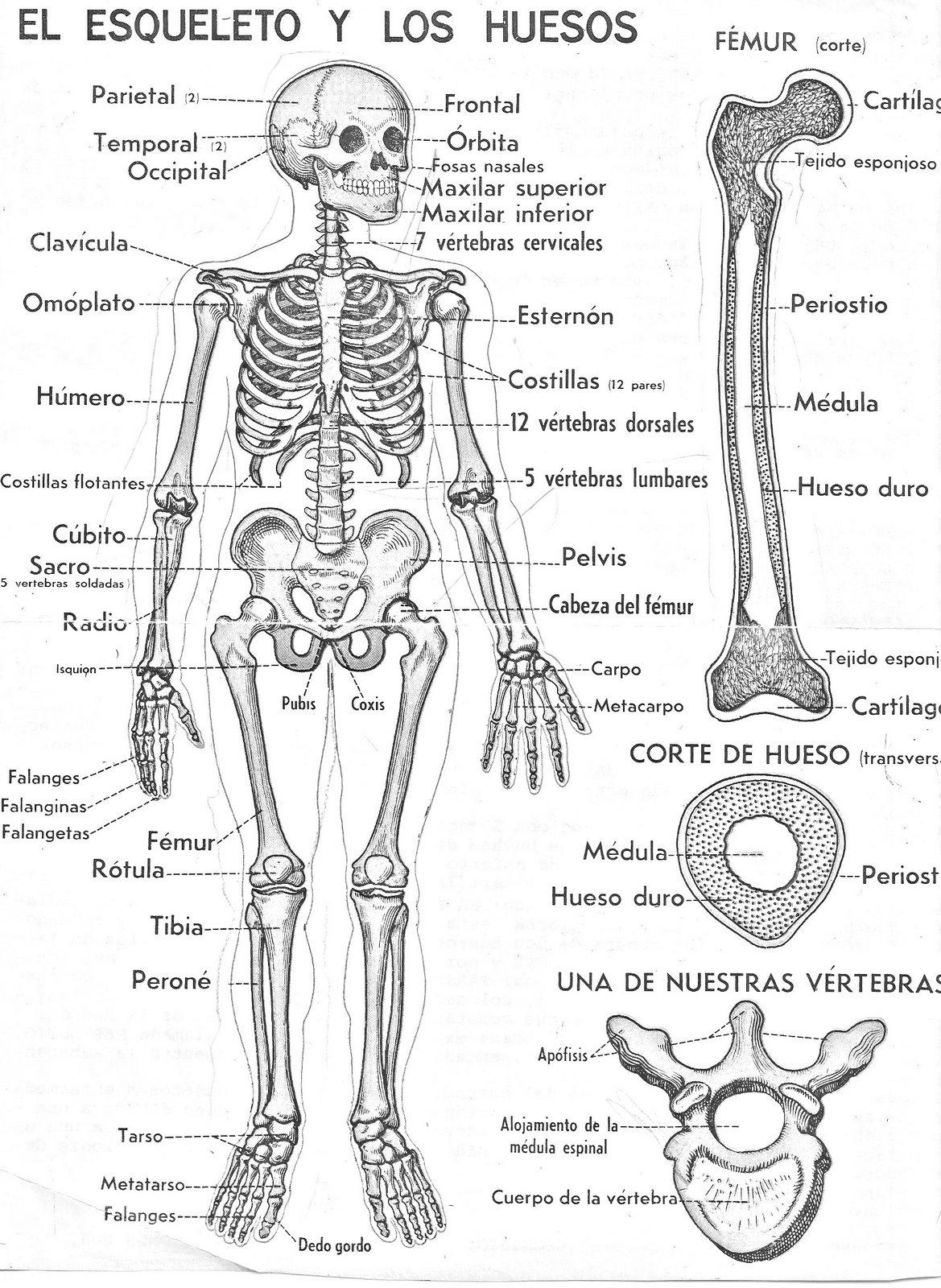 ANATOMIA: ESTUDIO DE LA ANATOMÍA ,BIOLOGÍA y FÍSICA