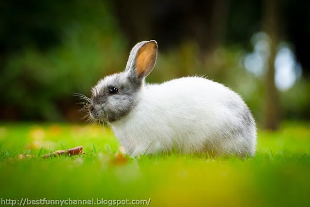 The nice-looking bunny.
