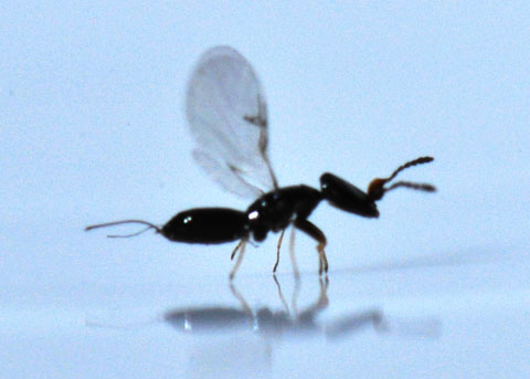 figs and fig wasps symbiotic relationship definition