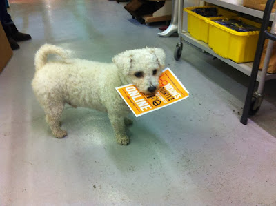 Nite, Bichon Frise Dog, Wood Street Indoor Market