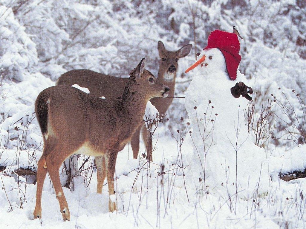 http://1.bp.blogspot.com/-5ajR-s2Xu3Q/TudXmfb6lpI/AAAAAAAABtU/utAIZSJ-OHM/s1600/ws_Christmas_1024x768.jpg