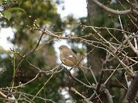 小鳥をゲット、でも名前が不明・・・