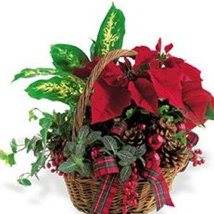 Send a Holiday Plant Garden