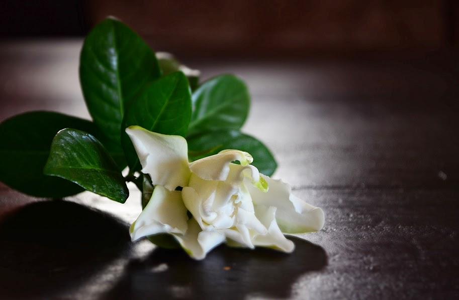 Jasmine by wafacwphoto