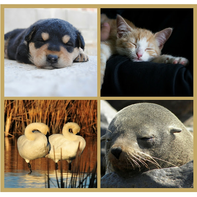 An Attitude Shift | Morgan's Milieu: Sleeping like these animals would be lovely!